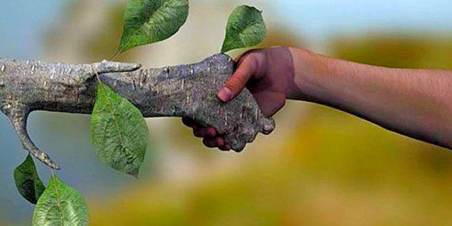Diferença entre ecologia e sustentabilidade