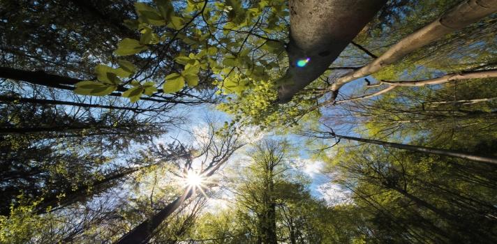 Diferença entre sustentabilidade e desenvolvimento sustentável