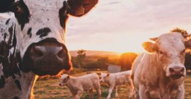 Impactos da pecuária no meio ambiente